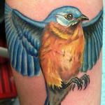 feminine realistic color blue bird on arm Tattoo Design Thumbnail