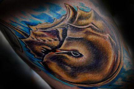 Aran Campas - Horseshoe Crab Tattoo