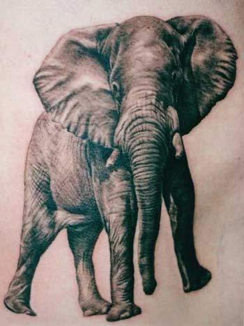 Shane ONeill - Elephant tattoo