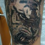 Tattoos - Angry Tiger - 100584