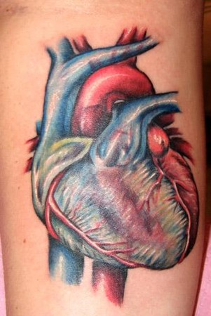 Evan Olin - anatomical heart