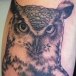 Tattoos - Owl - 98958