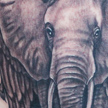 Tattoos - Elephant tattoo - 73096