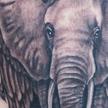 Tattoos - Elephant tattoo - 73096