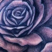 Tattoos - Black and grey rose tattoo - 69071