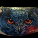 Tattoos - Realistic Color Owl Portrait  - 104988