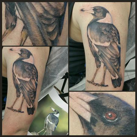 Tattoos - realistic magpie on arm - 113753