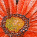 Tattoos - gerber daisy - 27476