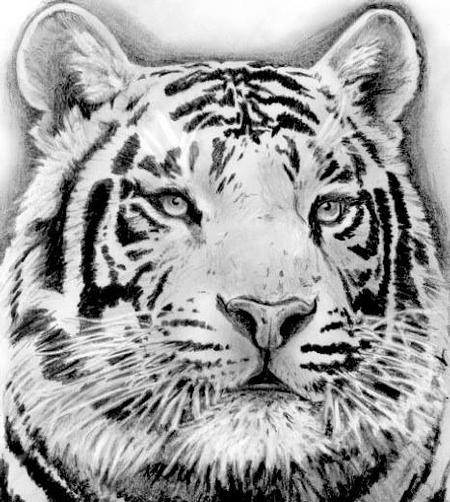 Tattoos - White Tiger - 102356