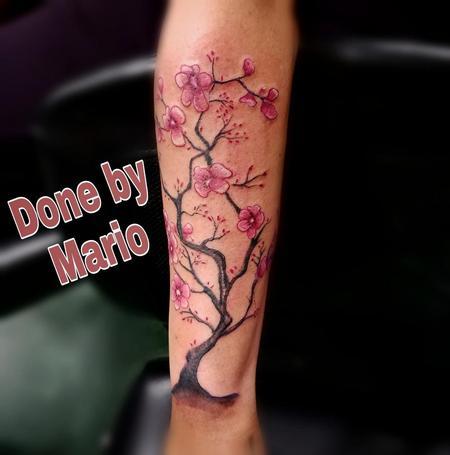 Mario Padilla - Cherry Blossom