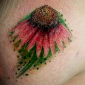Echinacea Tattoo Design Thumbnail