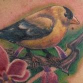Tattoos - Golden Finch - 78018