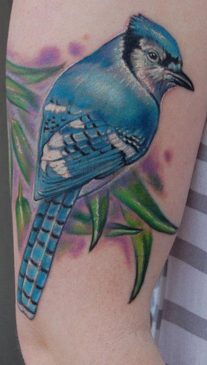 Evan Olin - Realistic color blue jay tattoo