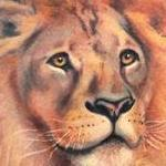 Tattoos - lion - 104733