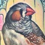 zebra finch Tattoo Design Thumbnail