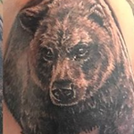 Tattoos - Grizzly  - 133057