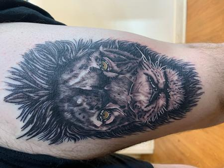 Scarred lion Tattoo Design