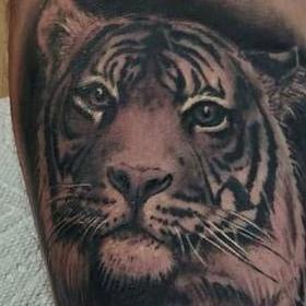Tattoos - Tiger and Cub - 142437