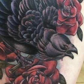 Tattoos - Bird and Roses - 130031