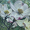 Dogwood flower canvas art print