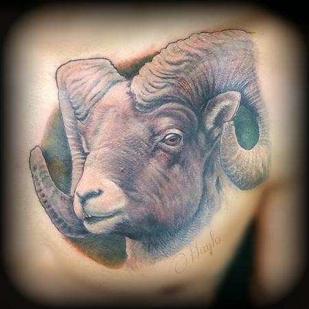 Tattoos - Big horn sheep / ram tattoo - 141094