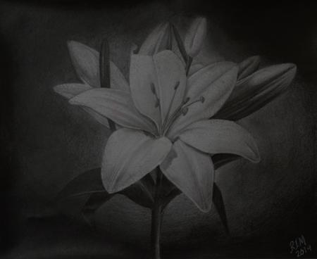Rafael Marte - Pencil sketch - Lillies